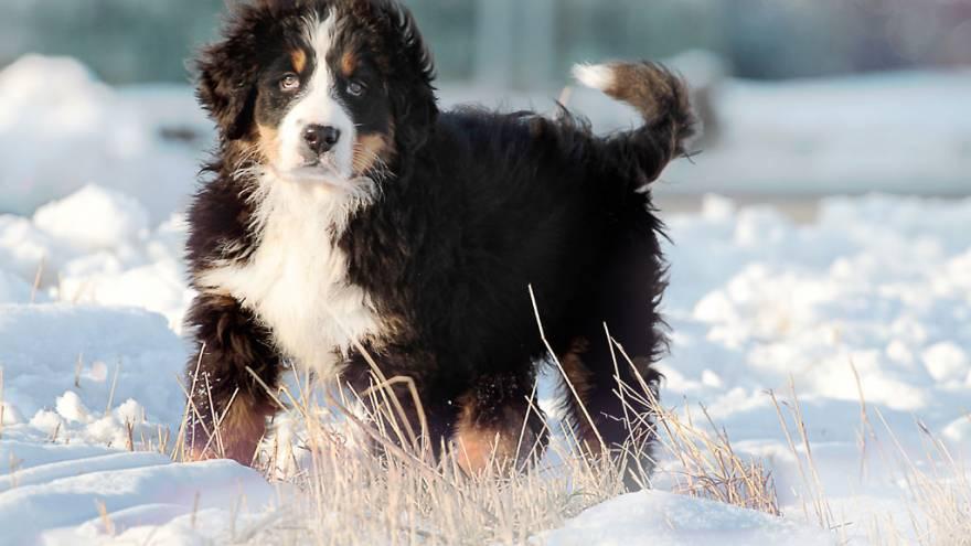 Was Tun Bei Lipomen Hunde Natürlich Behandeln