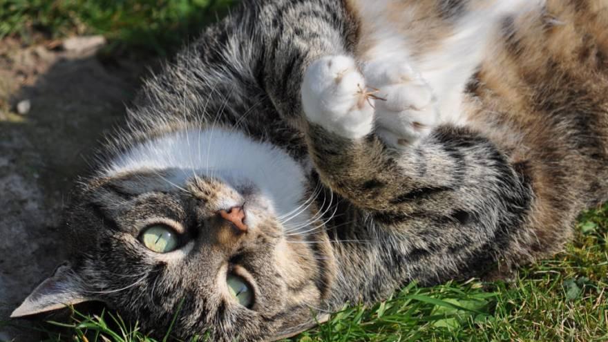 Was Tun, Wenn Die Katze Zu Dick Ist?