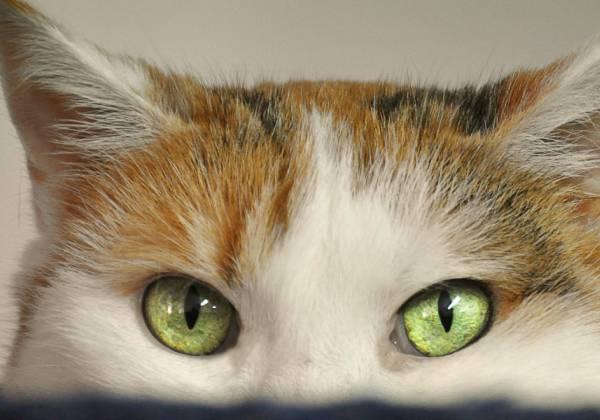 Was Tun Wenn Die Katze Krank Ist? Hilfreiche Tipps Zu