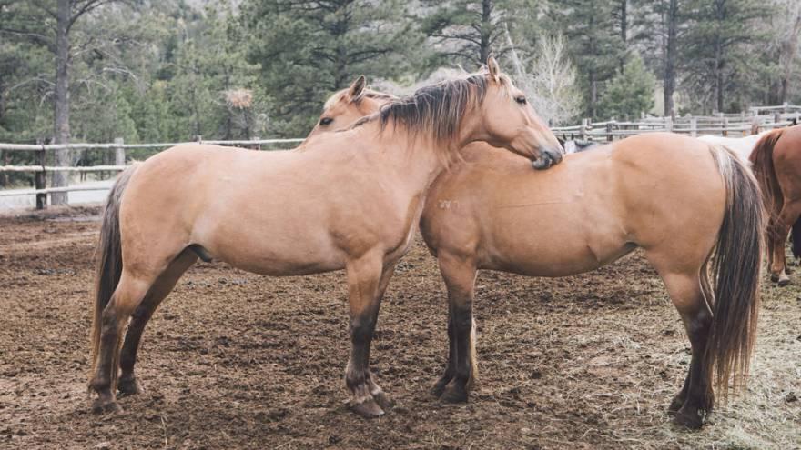 Diabetes bei Pferden - erkennen und behandeln  VS.