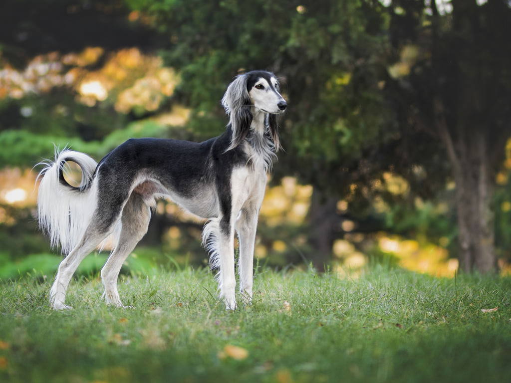 Hauterkrankungen Beim Hund Richtig Behandeln