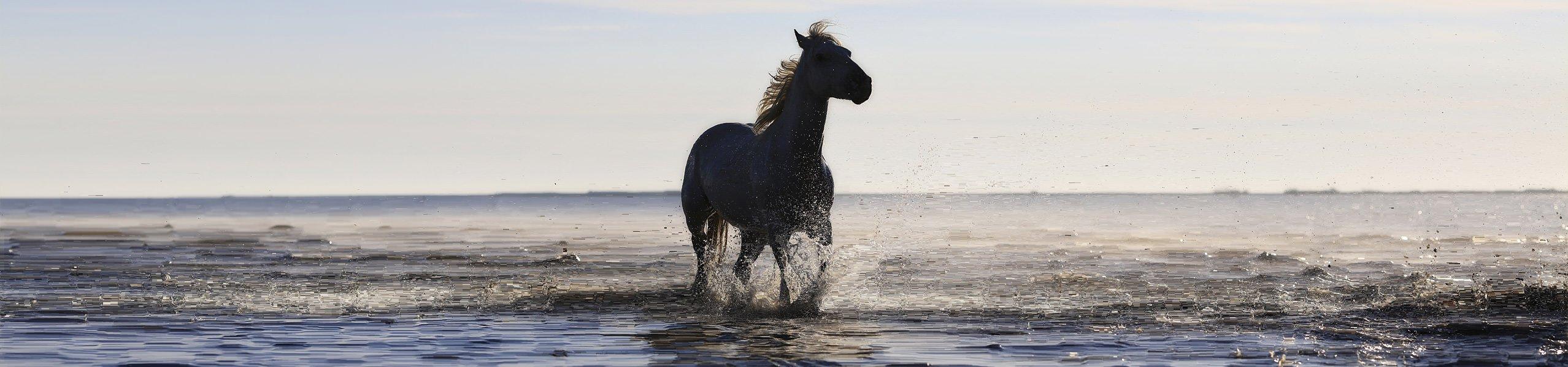 hufrollenentz ndung beim pferd erkennen und behandeln. Black Bedroom Furniture Sets. Home Design Ideas
